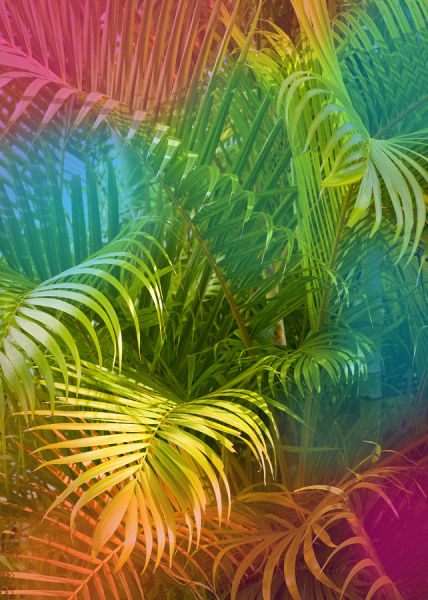 Colorful Palm Leaves